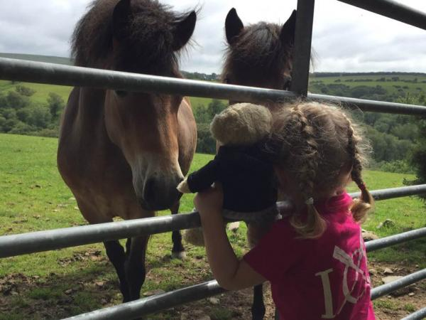 Make Friends With Our Exmoor Ponies