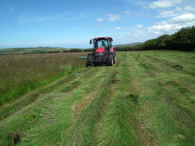 Cutting grass for hay